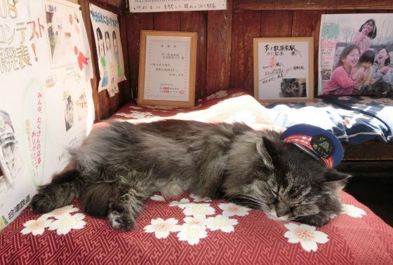 猫のばす駅長、おめざめ待ちでした♪