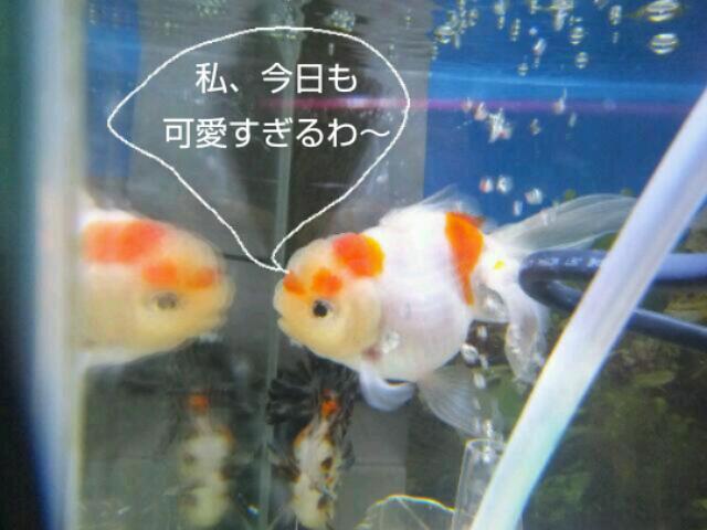 20130408_205854.jpg